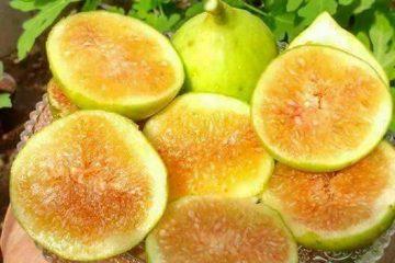 Buah Mengandung Banyak Serat dan Vitamin agar BAB Lancar
